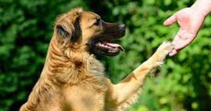 Adiestrador canino en Toledo