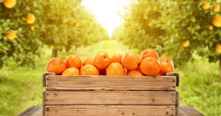 Comprar naranjas online de Valencia de HortdePepe