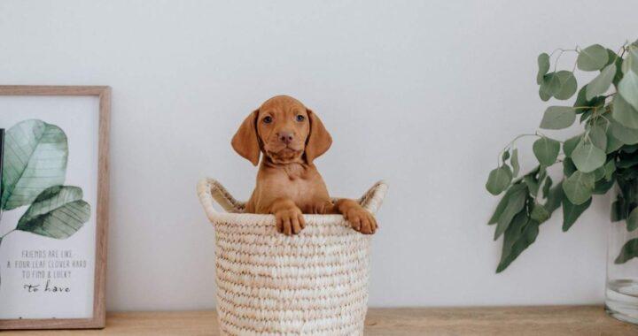 ¿Cómo adiestrar a un cachorro de 2 meses? Tu Adiestrador Online