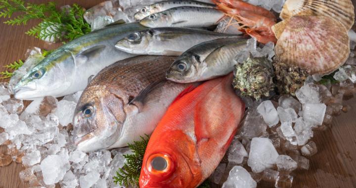 Aacore Supply ofrece las cámaras frigoríficas para pescaderías más populares en España